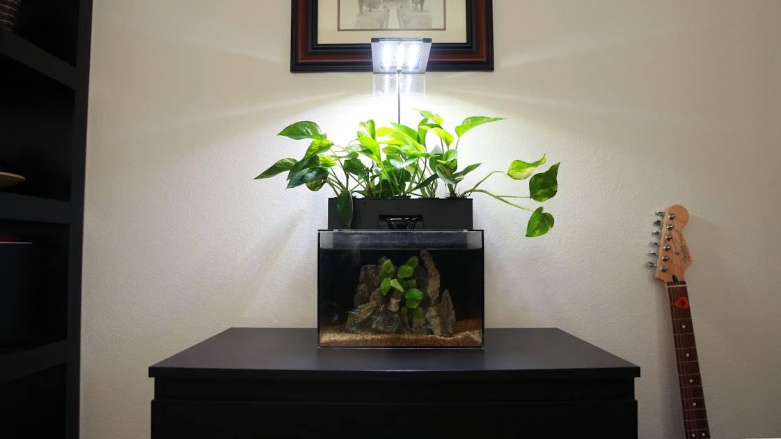 EcoQube Terrarium + Tank