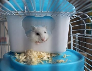 Top 10 Hamster Cages: Give Your Furry Friend the Perfect Home in 2021